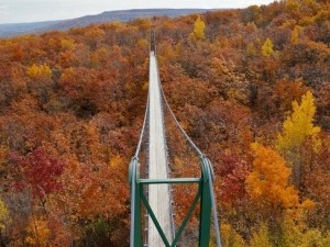 Fall colours and the suspension bridge